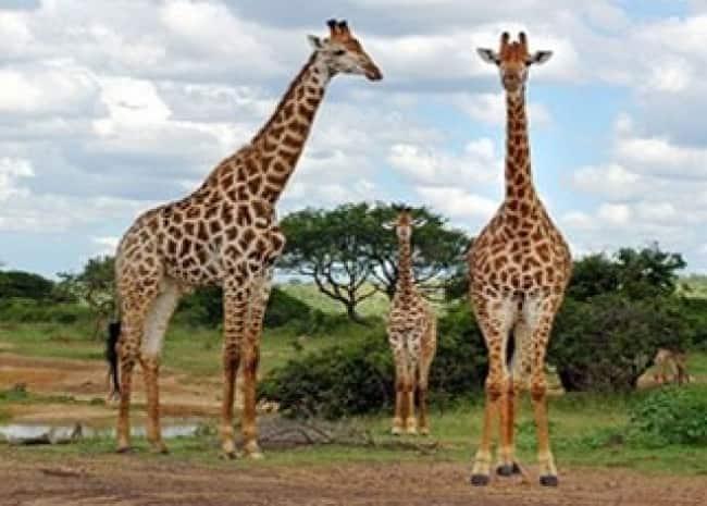 ESCAPE A SUDAFRICA | MAY, JUN, JUL, AGO, SEP Y OCT