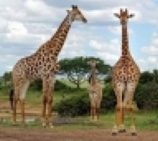 SUDAFRICA Y MAURITIUS | ENERO